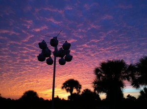 Purple Martin Gourds and Sunrise