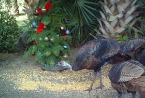 Turkeys and Tree