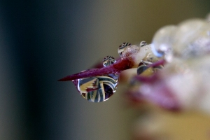 Agave Spine with Rain Drop Magnifying Plant Below