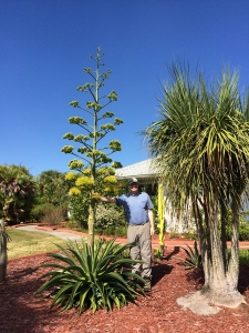 Richard Beside Agave Flower Stalk (Nov. 1, 2014)