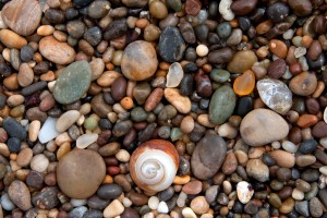 Colorful Pebbles and Orange Turban Shell