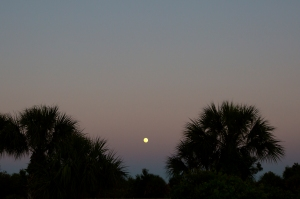 Moonrise in Florida