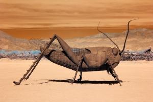 Infrared Grasshopper