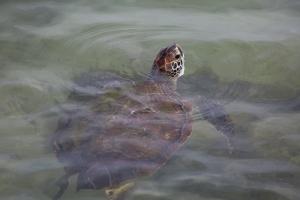 Beautiful Pattern on Back of Sea Turtle Head