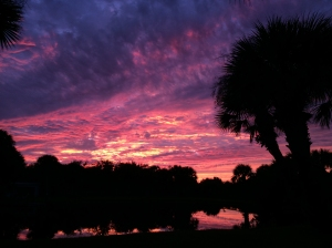 Florida Sunset Pink Sky