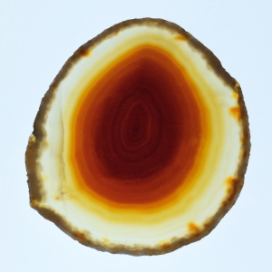 Cross Sections of Agate and Stinkhorn Egg Look Similar