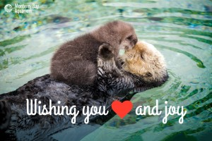 Holiday e-Card by Monterey Bay Aquarium