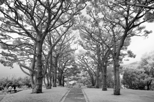 Black and White Image of Walkway Outside
