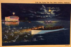 Vintage Flying Fish Spotting Postcard