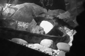 Wolf Eel Guarding Ball of 10,000 Eggs