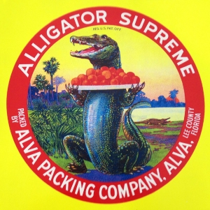 Vintage Alligator Orange Fruit Crate Label