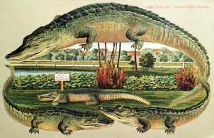 Vintage Postcard: Big Joe Alligator