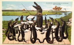 Vintage Postcard: Alligator Chorus