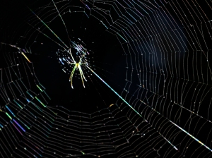 Rainbow Spider Web