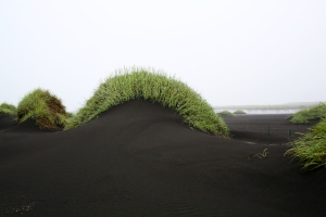 Dune Covered with Green Grass