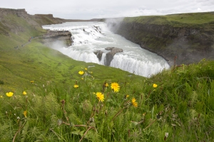 Gullfoss Waterfall with Dandelions and Buttercups