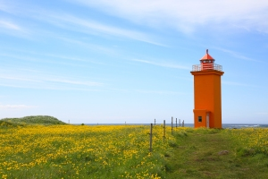 Orange Stafnesviti Lighthouse in Field of Buttercups