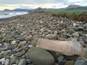 Pebbly Beach with Whale Bone and Driftwood