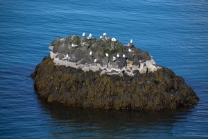 Birds Nesting on Rock Offshore