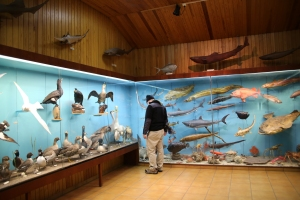 Nature Display at Saeheimar Aquarium
