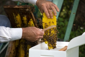 Brushing the Bees from the Comb