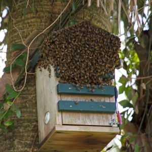 Bees in Birdhouse