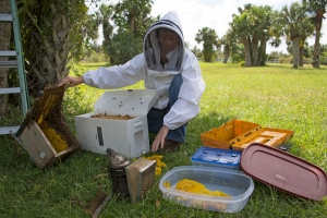 Bee Removal Operation