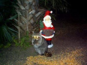 Raccoon and Santa