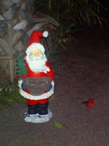 Cardinal and Painted Bunting by Santa