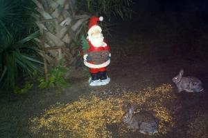 Bunnies and Santa