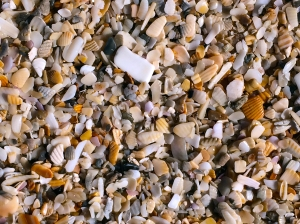 Shell Bits on Beach