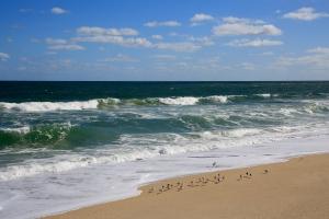 Sebastian Beach and Birds