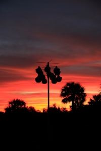 Purple Martin Nesting Gourds and Pink Sunrise