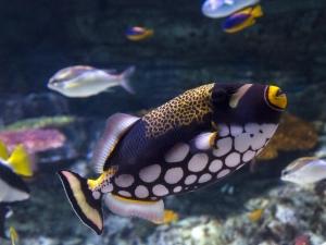 california long beach aquarium naturetime