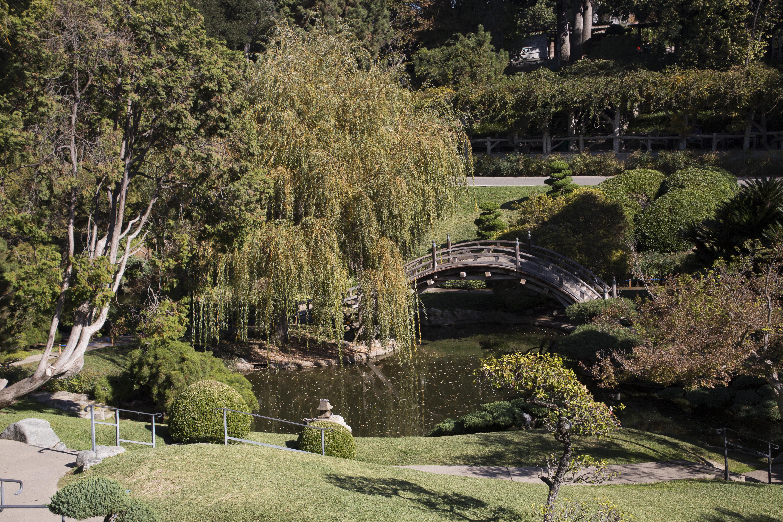 Tranquil Japanese Garden\'s Weeping Willow Overhanging Bridge ...
