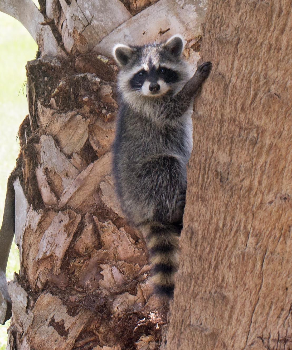 ad653ca31f 12 Animals To Learn Climbing Skills From | Survivopedia